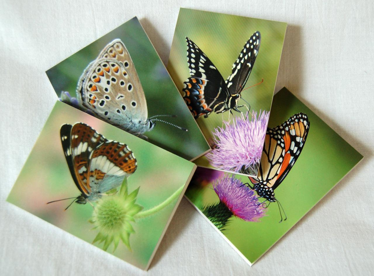 vlinder notitieblokjes