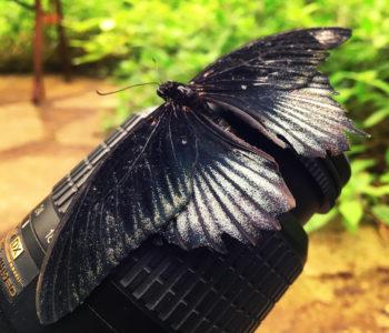 Vlinder Op Cameralens